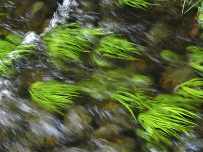 happa_in_the_stream.jpg