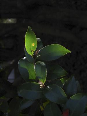 leaf090206.jpg