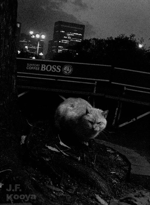「ボス」 by J.F.Kooya