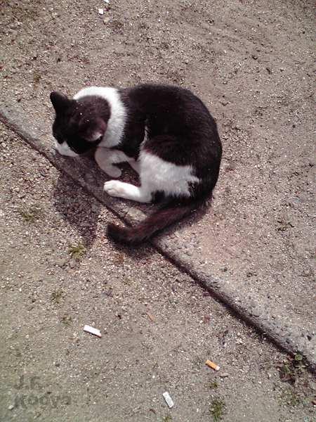 猫と戯れる03