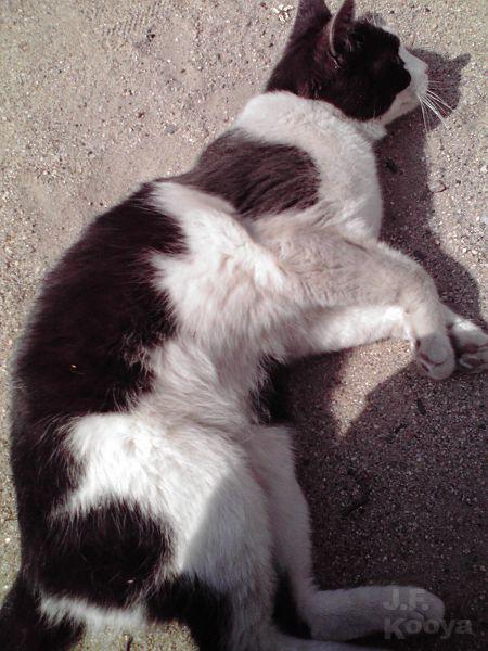 猫と戯れる08