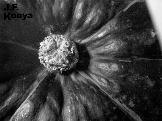 『南瓜20100228_02』by J.F.Kooya